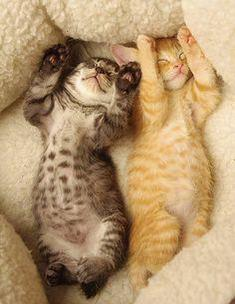Two adorable exposed kittens sleeping their troubles away.
